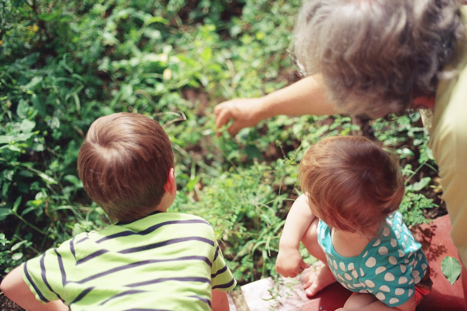 Nature trail: a grandma points into bushes with two young children