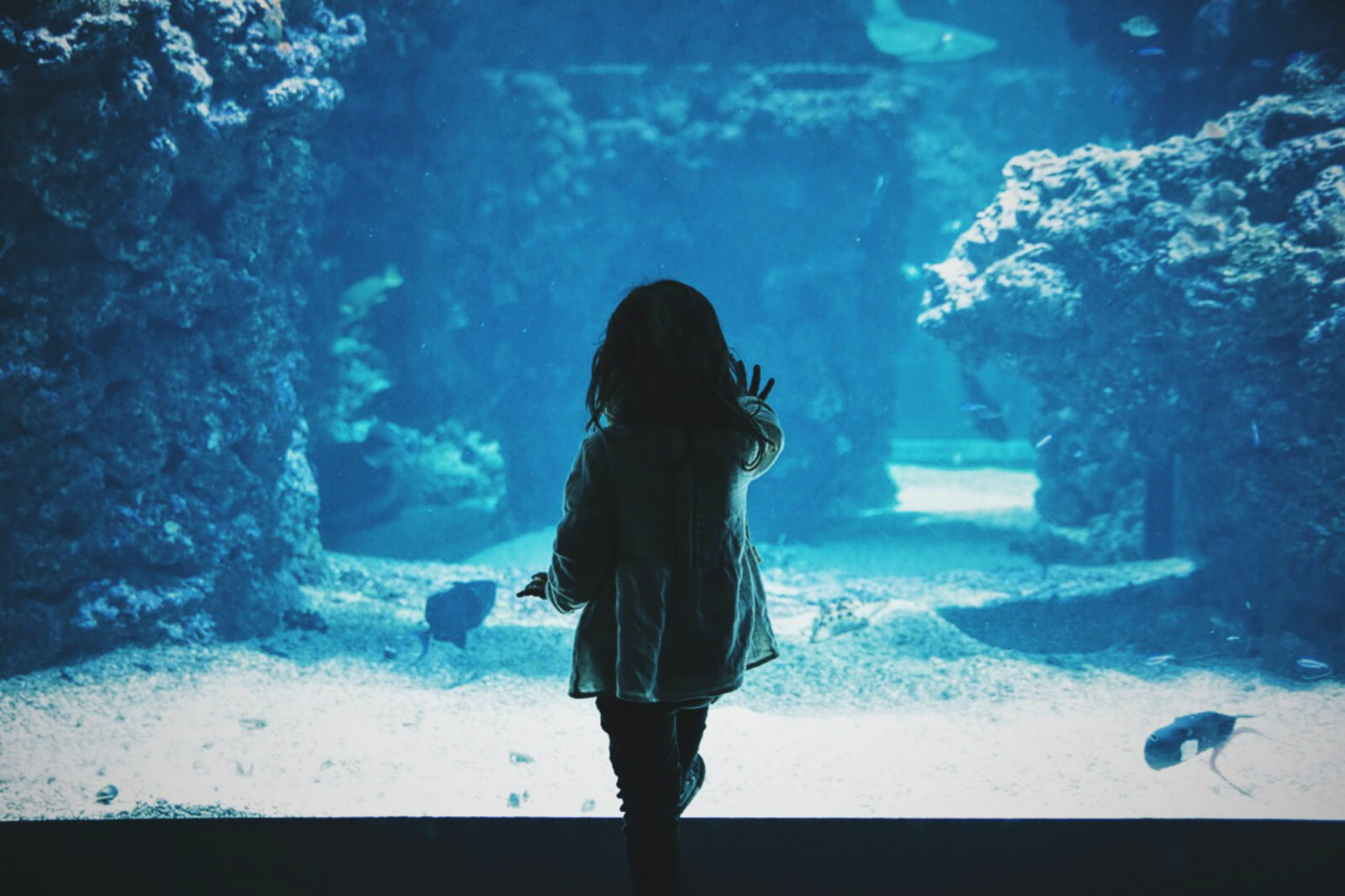 Autism: a small child looking into an aquarium with their hand on the glass